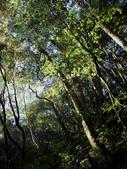 司馬庫斯之森林溪瀑:IMG_4392a.jpg