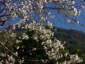 春訪奧萬大森林遊樂區:PICT0025a.jpg