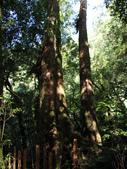 司馬庫斯之森林溪瀑:IMG_4432a.jpg
