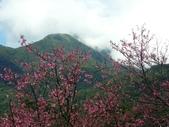 2014 陽明山花季:PICT0012a.jpg