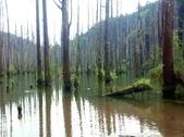「 水漾森林」~尋幽探祕:PICT0133a.jpg