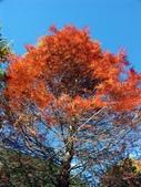 這一季的高山農場~武陵+福壽山:PICT0010a.jpg