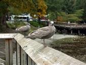 百分百玩加2-B:溫哥華之馬蹄灣~史丹利公園~加拿大廣場:PICT0041a.jpg