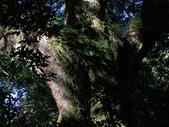 司馬庫斯之森林溪瀑:IMG_4425a.jpg