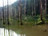「 水漾森林」~尋幽探祕:PICT0135a.jpg