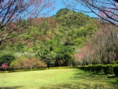 春訪奧萬大森林遊樂區:PICT0011a.jpg