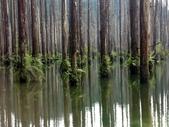 「 水漾森林」~尋幽探祕:PICT0138a.jpg