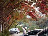 汐止拱北殿楓紅:PICT0026a.jpg