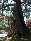 百分百玩加3-B:維多利亞之比根丘公園~橡樹灣~黃金溪:PICT0054a.jpg