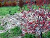 這一季的高山農場~武陵+福壽山:PICT0098a.jpg