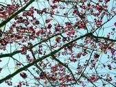 春訪奧萬大森林遊樂區:PICT0027.JPG