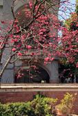 2015 春節~走訪集集小鎮:IMG_8257a.jpg