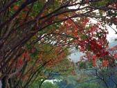 汐止拱北殿楓紅:PICT0030a.jpg