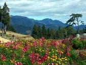 這一季的高山農場~武陵+福壽山:PICT0081a.jpg