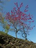 春訪奧萬大森林遊樂區:PICT0003a.jpg