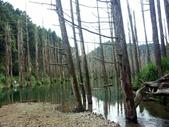 「 水漾森林」~尋幽探祕:PICT0147a.jpg