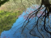 春訪奧萬大森林遊樂區:PICT0013a.jpg