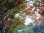 汐止拱北殿楓紅:PICT0033.jpg
