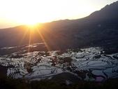 d6A:多依樹日出、霸達梯田景觀:P1260525p.jpg