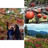 這一季的高山農場~武陵+福壽山:相簿封面