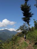 司馬庫斯山林漫步:IMG_4469a.jpg