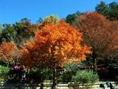 這一季的高山農場~武陵+福壽山:PICT0013a.jpg