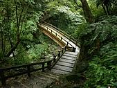 滿月圓森林雨中漫步:PICT0028a.jpg