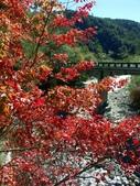 這一季的高山農場~武陵+福壽山:PICT0005a.jpg