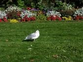 百分百玩加3-B:維多利亞之比根丘公園~橡樹灣~黃金溪:PICT0048a.jpg