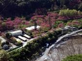 春訪奧萬大森林遊樂區:PICT0004a.jpg