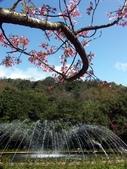 2014 陽明山花季:PICT0052a.jpg