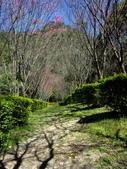 春訪奧萬大森林遊樂區:PICT0014a.jpg