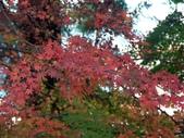 這一季的高山農場~武陵+福壽山:PICT0131a.jpg
