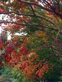 汐止拱北殿楓紅:PICT0037a.jpg