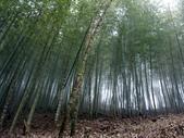 竹山天梯~太極峽谷探險:PICT0001v.jpg