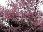 拉拉山休閒農場賞花趣~:PICT0023a.jpg