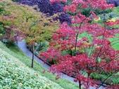 百分百玩加4-B:維多利亞--布查花園(Butchart Garden ):P1010235a.jpg