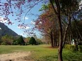 春訪奧萬大森林遊樂區:PICT0031a.jpg
