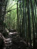 司馬庫斯山林漫步:IMG_4458a.jpg