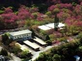 春訪奧萬大森林遊樂區:PICT0005a.jpg