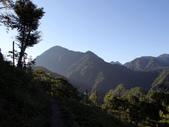 司馬庫斯山林漫步:IMG_4371a.jpg