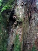 司馬庫斯之森林溪瀑:IMG_4409a.jpg