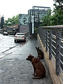 碧潭‧和美山雨中漫步:PICT0695a.jpg