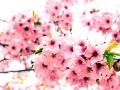 拉拉山休閒農場賞花趣~:PICT0026a.jpg