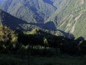 司馬庫斯山林漫步:IMG_4369a.jpg