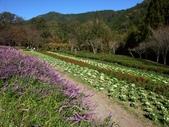 這一季的高山農場~武陵+福壽山:PICT0035a.jpg