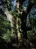 司馬庫斯之森林溪瀑:IMG_4429a.jpg