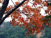 汐止拱北殿楓紅:PICT0045a.jpg