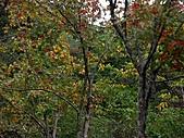 滿月圓森林雨中漫步:PICT0095a.jpg