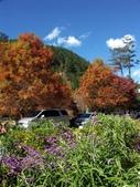 這一季的高山農場~武陵+福壽山:PICT0008a.jpg